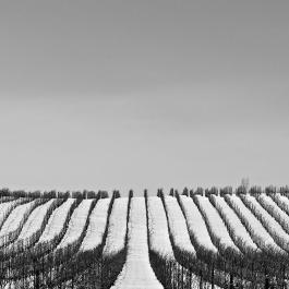 Megalomaniac Vineyard in Winter